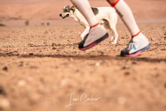 Dog and runner in multi-day race